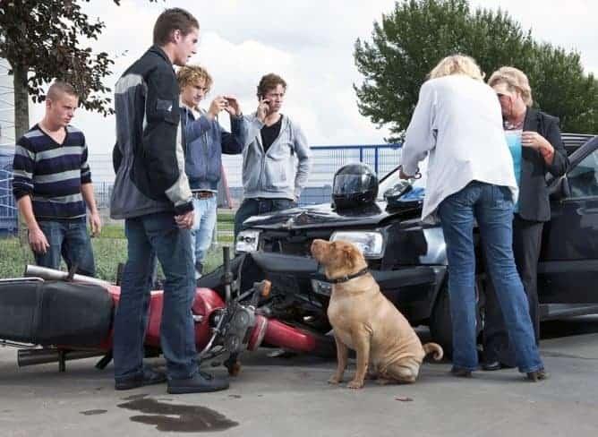 Unfall Verkehr Auto Motorrad Hund Sorgfaltspflicht Versicherung Haftung