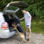 Hund & Auto