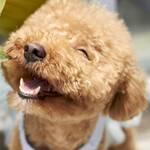 Hunde Lächeln