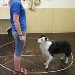 Mensch-Tier-Beziehung Messerli Forschungsinstitut