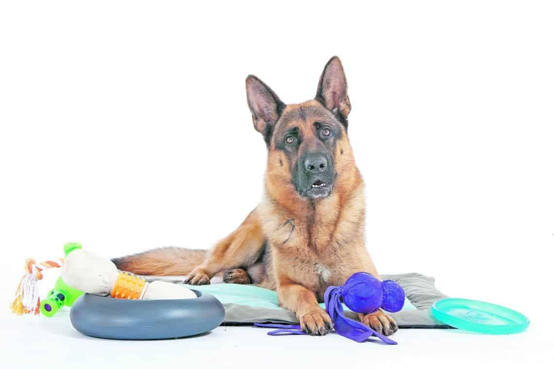 Gift-Cocktail im Hundespielzeug - Die Hundezeitung