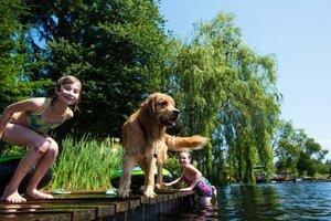 baden mit hund badesee badeplatz hundestrand österreich urlaub golden retriever sommer