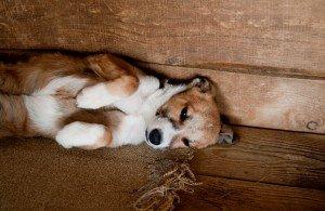 Hund - Zeitumstellung