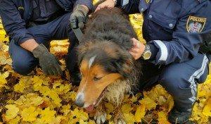 Erschöpft aber wohlauf konnte Rexi von der Autobahn geborgen werden. Foto: Polizei