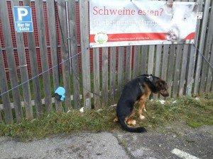 Pfotenhilfe Hund am Zaun