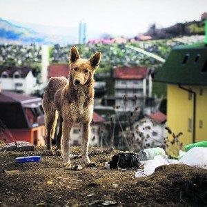 Aufatmen für die Betreiber eines Auffanglagers für Straßenhunde in Serbien. Foto: istock