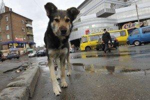 Streuner und ausgesetzte Hunde sind keine Wildtiere. Foto: VIER PFOTEN