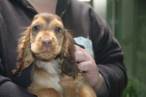 Kenzo ist erst etwa zwei Monate alt. © Wiener Tierschutzverein