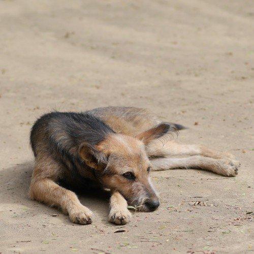 Tierschützer kämpfen seit Jahren meist vergeblich für mehr Rechte für rumänische Streuner.