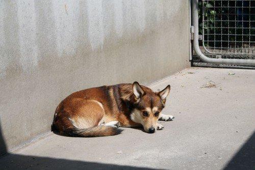 Filou im Tierheim zurückgelassen
