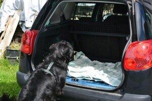 3. Schritt: Leckerlis liegen auf der Decke im Auto Foto: © Hauser