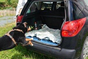 4.Schritt: Hund springt ins Auto Foto: © Hauser