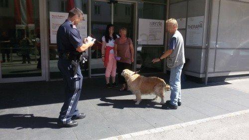 Der Hund wurde von der Tierrettung übernommen. Foto: © Presseteam der Feuerwehr Wiener Neustadt1