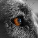 Augen Hund sehen Farben