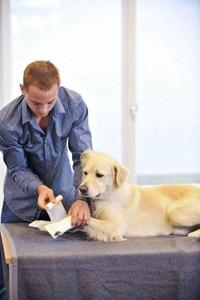 Mit etwas Übung schafft es jeder, seinem Hund einen Fußverband anzulegen.
