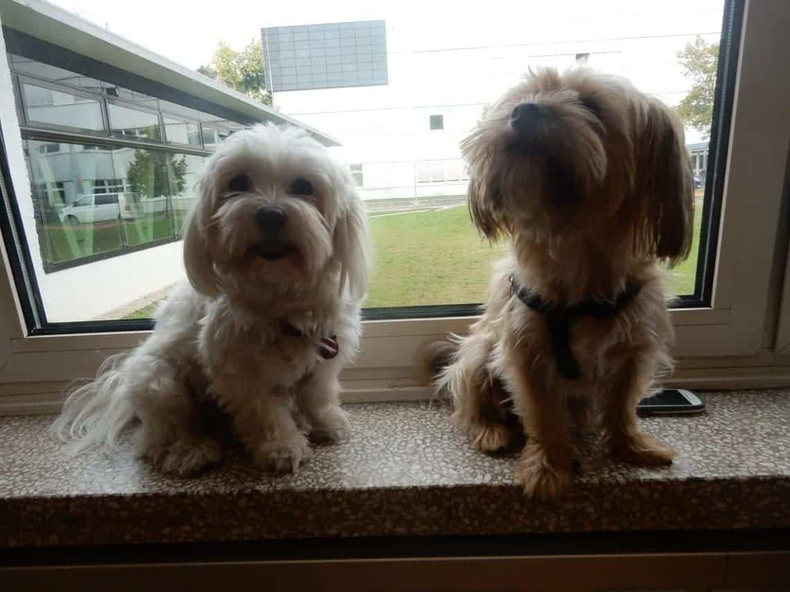 Unsere Hundezeitungs-Hunde Phoebe und Sammy