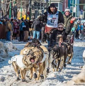 Iditarod Mike Kenney - Schlittenhunderennen