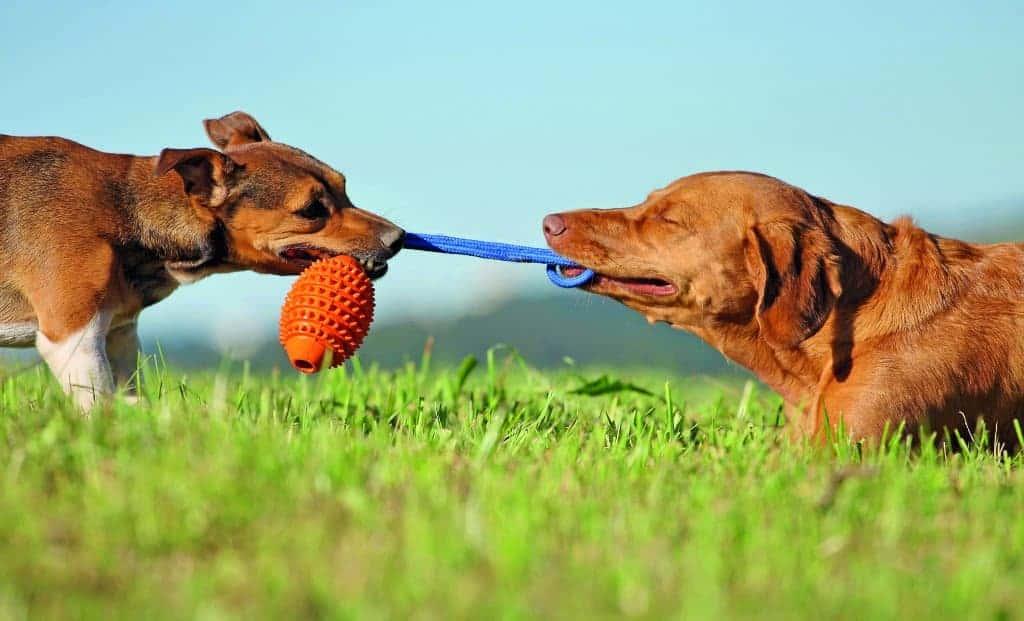 Hunde Spiele Kostenlos Spielen Deutsch