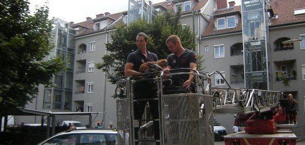 Berufsfeuerwehr Graz: Pekinese in Dachrinne