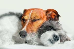 Kuschelnde Hunde