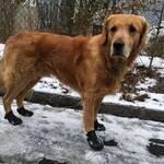 Schnee, Salz, Eis - Schuhe für den Hund