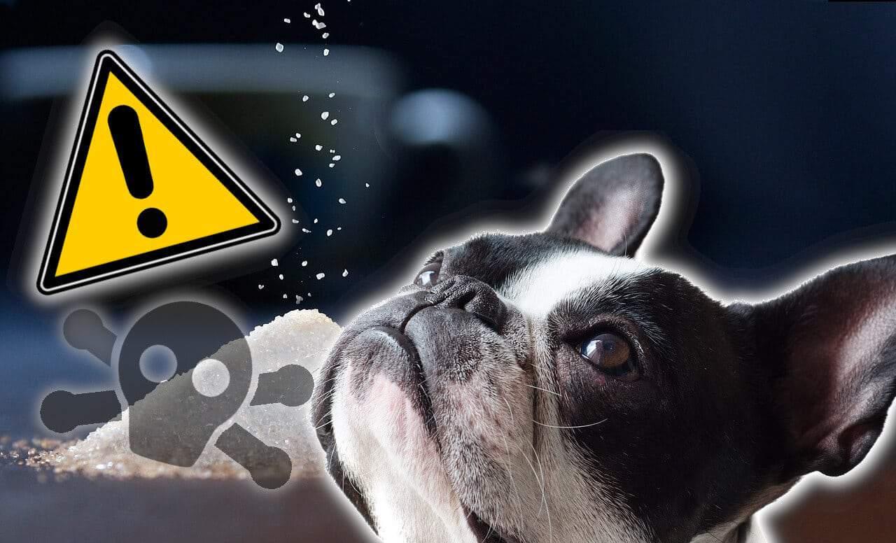 Tödliche Gefahr Für Hunde Birkenzucker Xylitol