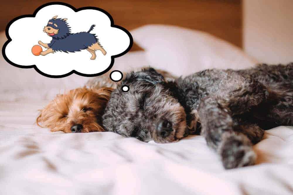 Sooo müdedas Phänomen Hundeschlaf Die Hundezeitung
