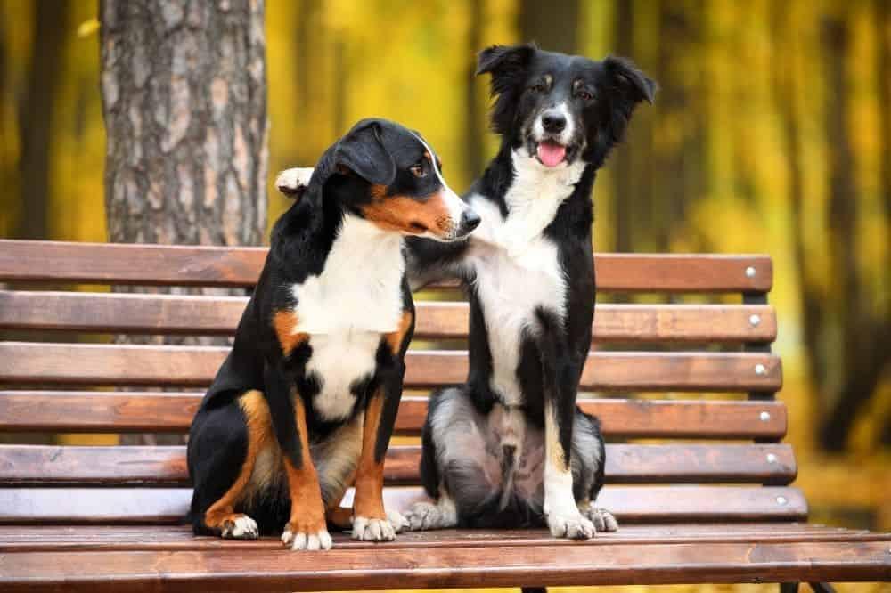 Zwei Hunde sitzen auf einer Parkbank.