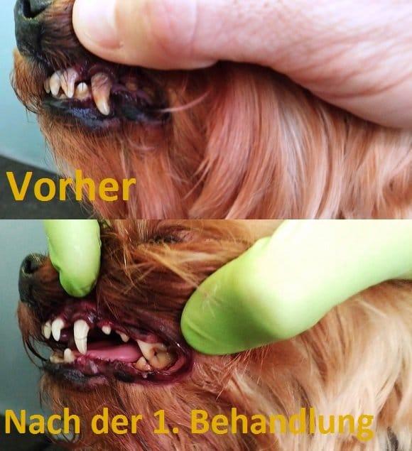 Doggerie Hundesalon und Boutique: Mili vor und nach der Zahnbehandlung