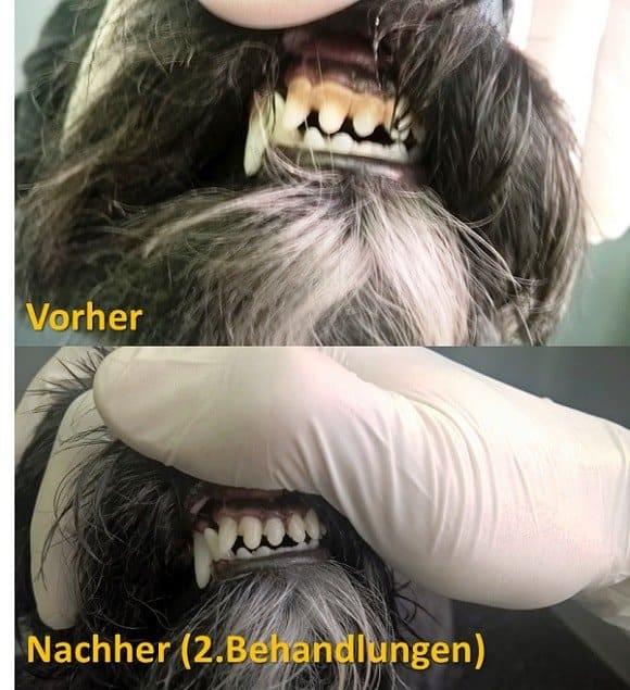 Doggerie Hundesalon & Boutique:Zahnbehandlung vorher_nachher Vergleich
