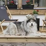 Bewegte Berge Saalefelden mit Hund