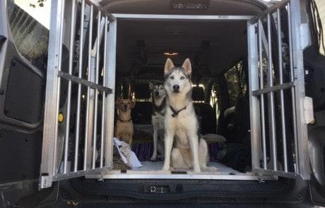 Safety Dog Systems Schutzgitter