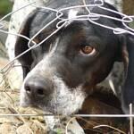 Zwingerhaltung Hund Gefahren