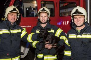 Küchenbrand: Hund schlägt AlarmKüchenbrand: Hund schlägt Alarm