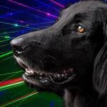 laser statt feuerwerk hund stress angst flat coated retriever silvester