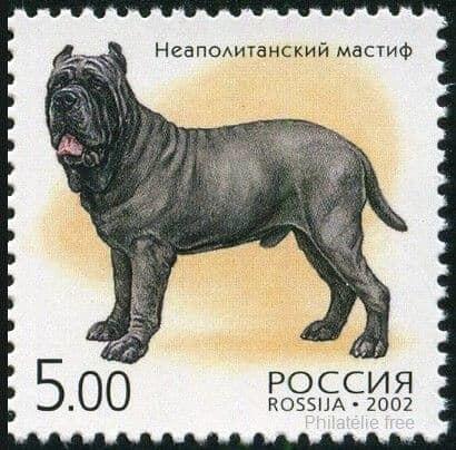 mastino napoletano neapolitanischer mastiff briefmarke russland hund rasse