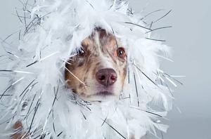 Fasching: So eine Verkleidung ist vielleicht für den Zweibeiner, selten aber für unsere Hunde mit großem Spaß verbunden.