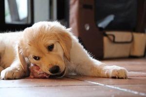 Welpe Pets Bio World