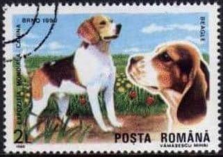 Beagle hunderasse briefmarke rumaenien 1990