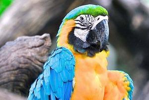 Mann stritt sich mit Papagei