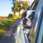 Hund und Auto müssen aneinander gewöhnt werden
