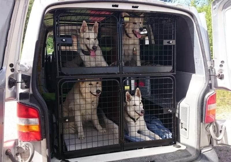 Alftaburen Hundeboxen und Gitter