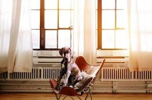 Sonne und Hitze mit Hund