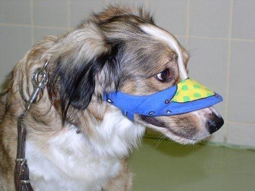 Hund mit Sonnenbrand VetMed Uni Vienna