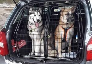 Alftaburen Hundeboxen, Hundetransportboxen und Gitter