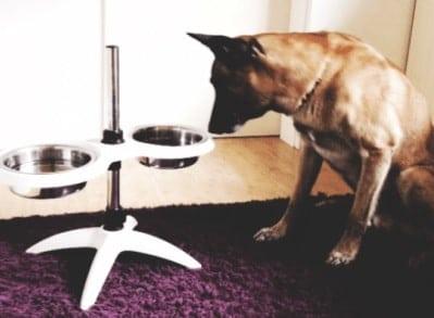Pettec_Doggybar