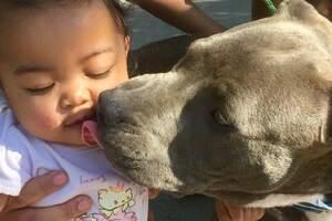 Pitbull Sasha mit Baby Masailah_Christine White_gofundme.com