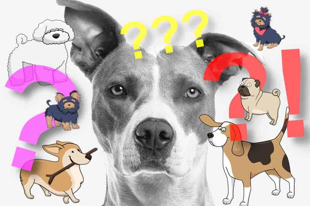Hunde Körpersprache