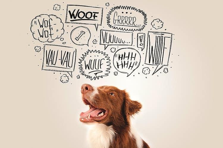 Hunde-ABC