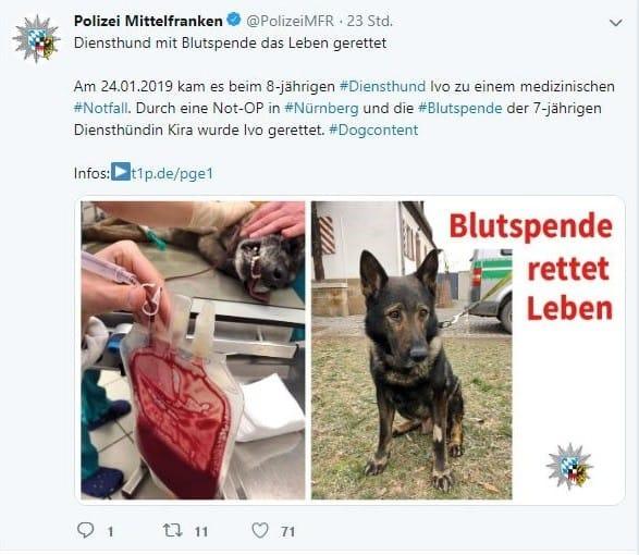 Nürnberger Polizeihund durch Blutspende gerettet